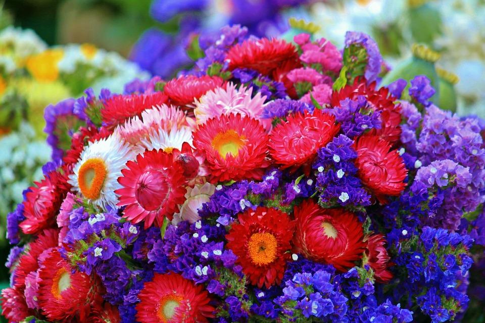 flowers-870031_960_720